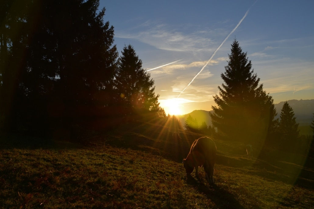 Morgenstimmung am Hauchenberg